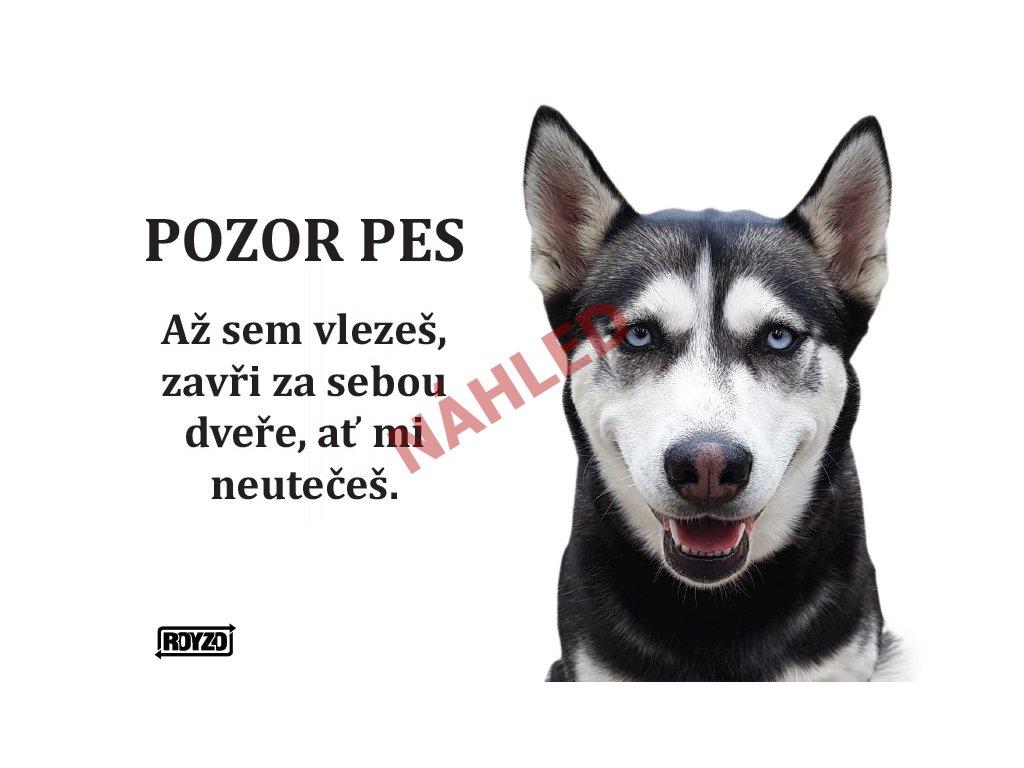 Výstražná vtipná samolepící cedule pozor pes - psí plemeno Sibiřský husky