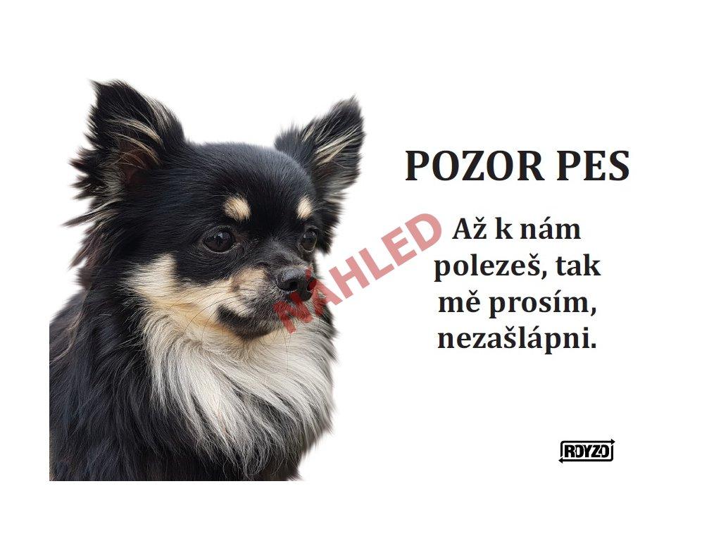 Výstražná vtipná cedule pozor pes - psí plemeno Čivava dlouhosrstá tmavá