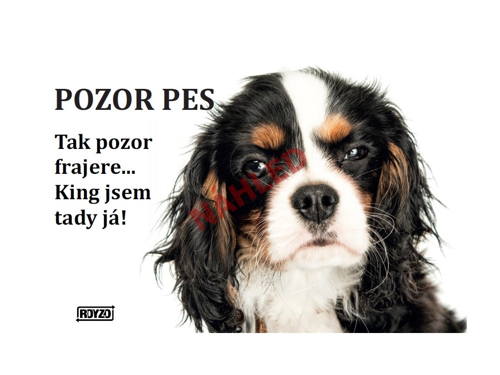 Výstražná vtipná cedule pozor pes - psí plemeno Kavalír King Charles španěl tricolour