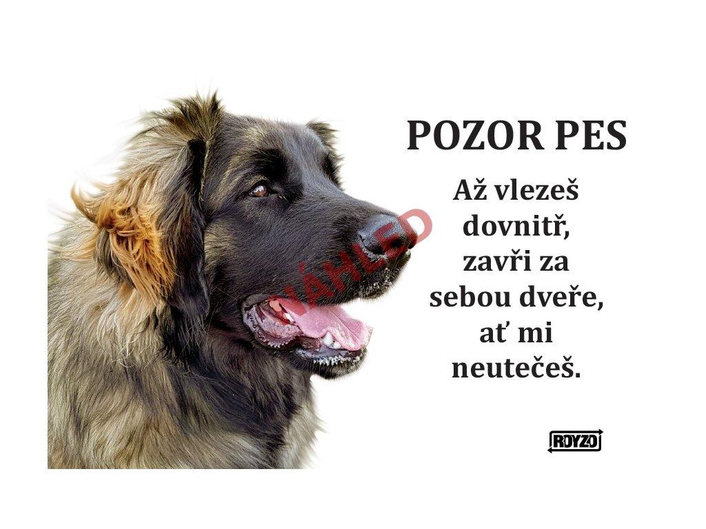 Výstražná vtipná cedule pozor pes - psí plemeno Leonberger