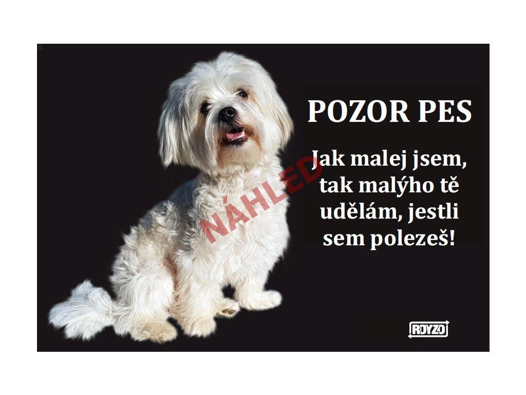 Výstražná vtipná cedule pozor pes - psí plemeno Boloňský psík