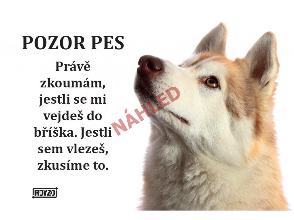 Výstražná vtipná cedule - Sibiřský husky - doprodej