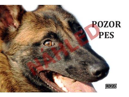 Výstražná vtipná samolepící cedule pozor pes - psí plemeno Belgický ovčák bez dodatku