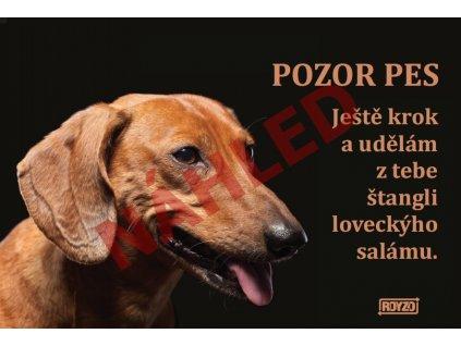 Výstražná vtipná cedule pozor pes - psí plemeno Jezevčík hladkosrstý hnědý