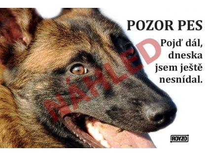 Výstražná vtipná samolepící cedule pozor pes - psí plemeno Belgický ovčák