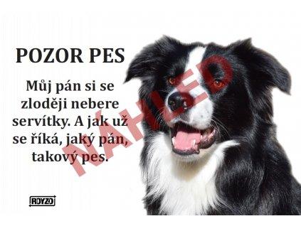 Výstražná vtipná samolepící cedule pozor pes - psí plemeno Border kolie