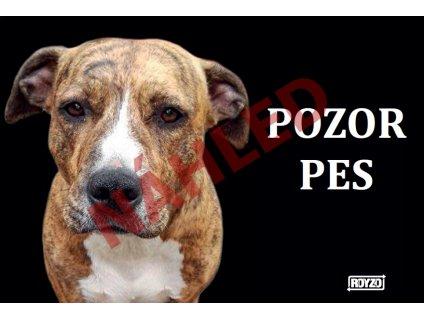 Výstražná vtipná samolepící cedule pozor pes - psí plemeno Pitbull X Stafford - černé pozadí