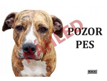 Výstražná vtipná cedule pozor pes na bílém pozadí - psí plemeno Pitbull X Stafford