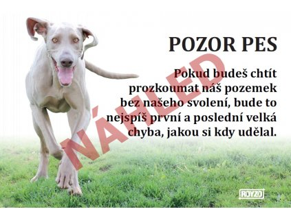 Výstražná vtipná cedule pozor pes - psí plemeno Výmarský ohař 2