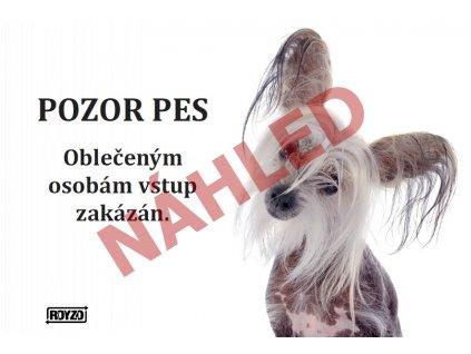 Výstražná vtipná cedule pozor pes - psí plemeno Čínský chocholatý pes