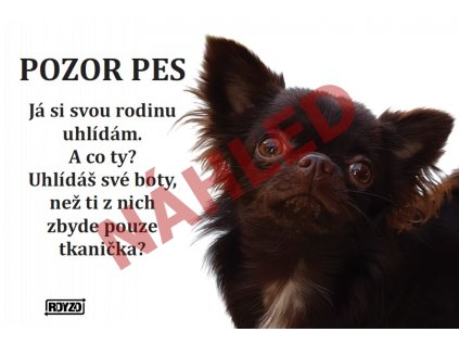 Výstražná vtipná samolepící cedule pozor pes - psí plemeno Čivava dlouhosrstá hnědá