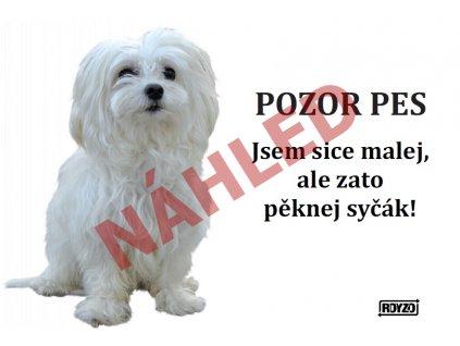 Výstražná vtipná cedule pozor pes - psí plemeno Maltézský psík