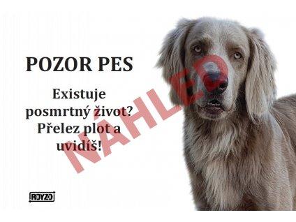 Výstražná vtipná samolepící cedule pozor pes - psí plemeno Výmarský ohař dlouhosrstý