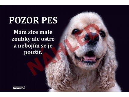 A Americky Výstražná vtipná cedule pozor pes - psí plemeno Americký kokršpaněl světle hnědý