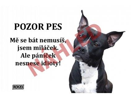Výstražná vtipná cedule pozor pes - psí plemeno Americký pitbulteriér černý