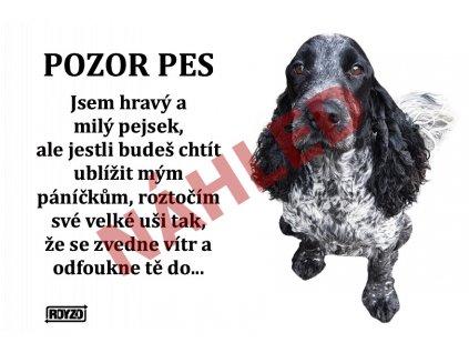 Výstražná vtipná cedule pozor pes - psí plemeno Anglický kokršpaněl modrý bělouš