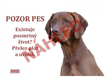 Výstražná vtipná cedule pozor pes - psí plemeno Maďarský ohař