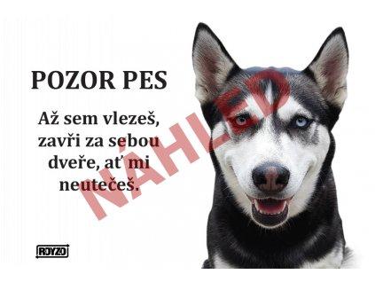 Výstražná vtipná cedule pozor pes - psí plemeno Sibiřský husky