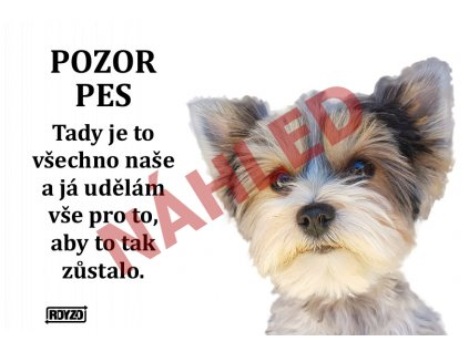 A Biewer Yorkshire terrier 2020