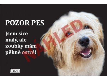 Výstražná vtipná cedule pozor pes - psí plemeno Havanský psík sobolí s bílou