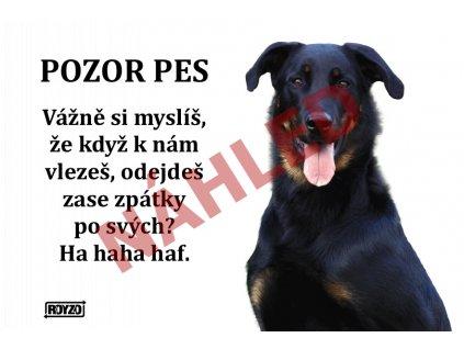 Výstražná vtipná samolepící cedule pozor pes - psí plemeno Beauceron