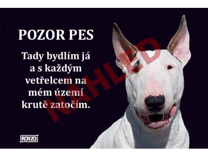 Výstražná vtipná samolepící cedule pozor pes - psí plemeno Bulteriér bílý