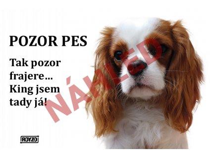 Výstražná vtipná samolepící cedule pozor pes - psí plemeno Kavalír King Charles španěl blenheim