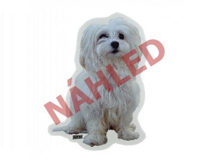 Samolepka Maltézský psík