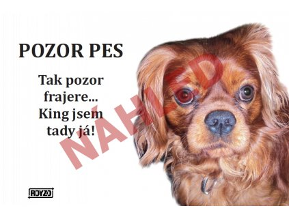 Výstražná vtipná cedule pozor pes - psí plemeno Kavalír King Charles španěl ruby