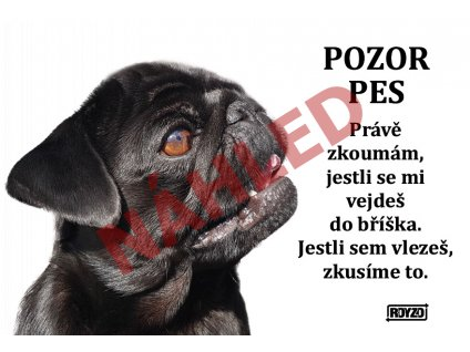 Výstražná vtipná cedule pozor pes - psí plemeno Mops černý