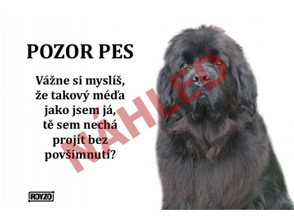 Výstražná vtipná cedule pozor pes - psí plemeno Novofudlandský pes