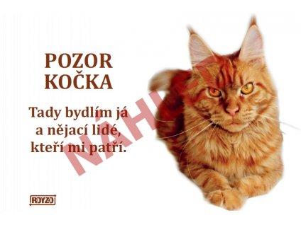 Výstražná vtipná samolepící cedule pozor kočka - Mainská mývalí kočka červená
