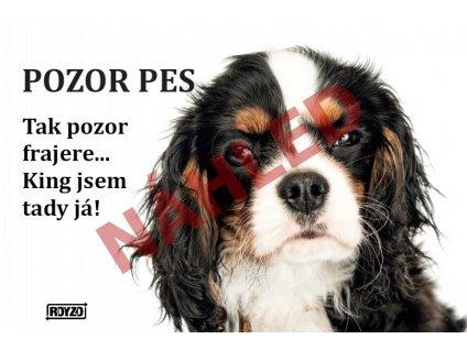 Výstražná vtipná samolepící cedule pozor pes - psí plemeno Kavalír King Charles španěl tricolour