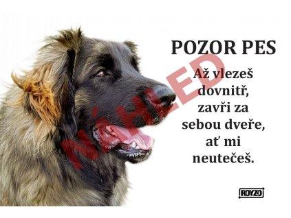 Výstražná vtipná samolepící cedule pozor pes - psí plemeno Leonberger