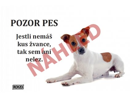 A Jack russell terier 2020