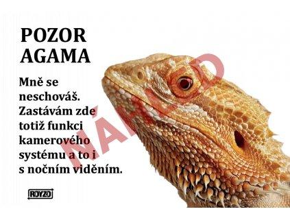 Výstražná vtipná cedule - POZOR AGAMA (Agama vousatá)
