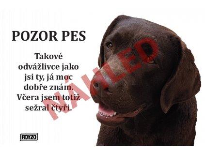 Výstražná vtipná samolepící cedule pozor pes - psí plemeno Labradorský retrívr hnědý