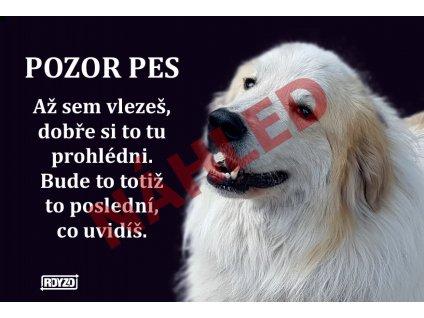 Výstražná vtipná samolepící cedule pozor pes - psí plemeno Pyrenejský horský pes
