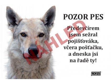 Výstražná vtipná cedule pozor pes - psí plemeno Československý vlčák