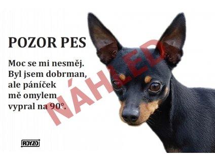 Výstražná vtipná cedule pozor pes - psí plemeno Pražský krysařík