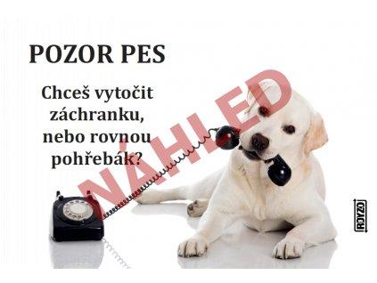 Výstražná vtipná cedule pozor pes - psí plemeno Labradorský retrívr