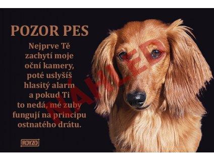 Výstražná vtipná samolepící cedule pozor pes - psí plemeno Jezevčík dlouhosrstý hnědý