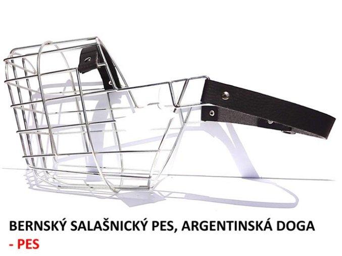 nahubek kovovy bernsky salasnicky pes argentinska doga pes
