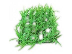 akva-rostlina-rost-13x13cm--1ks