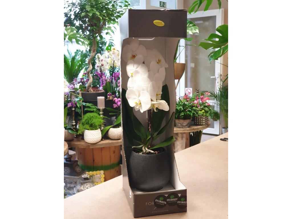 luxusná biela orchidea