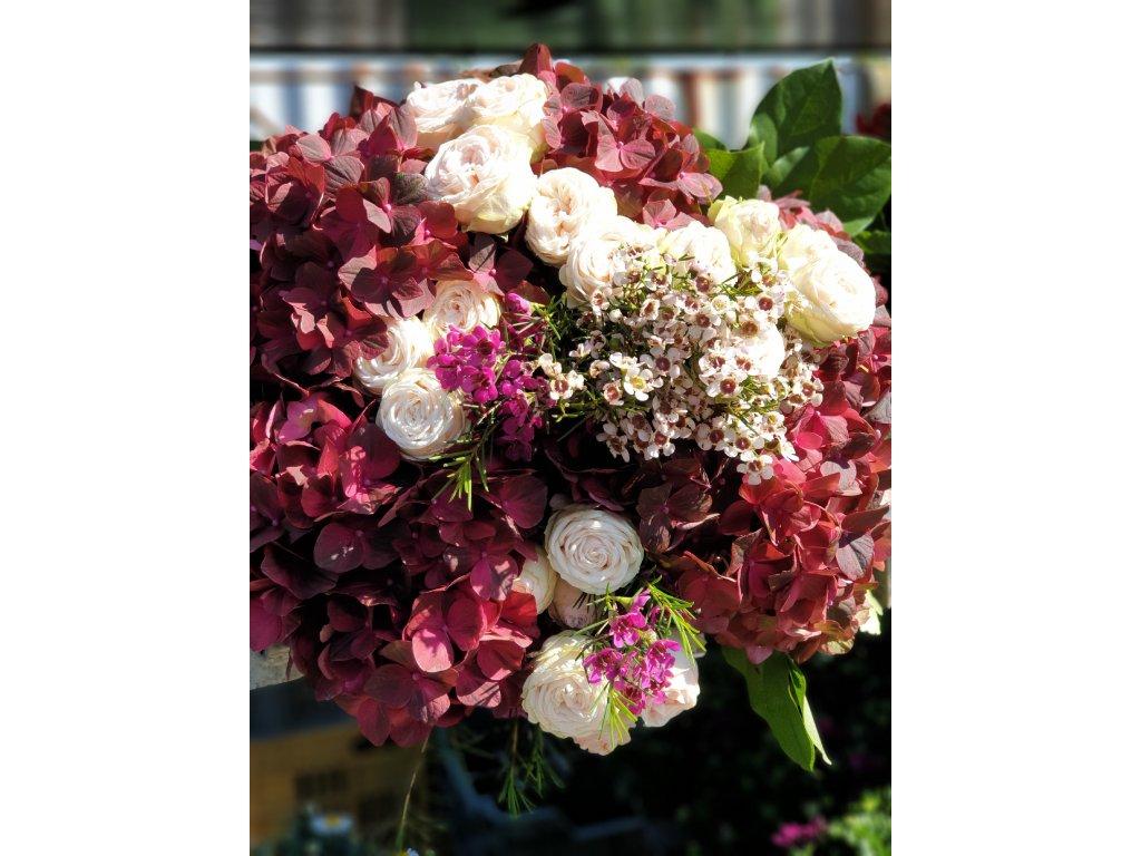 kytica hortenzii