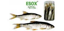 Esox nástražní rybičky v nálevu - Plotice
