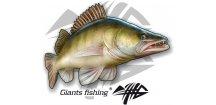Nálepka velká Giants Fishing Candát