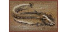 Delphin rohožka Retro sumec - 60 x 40 cm