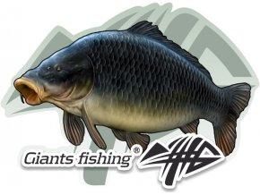 Nálepka malá Giants Fishing Kapr šupináč